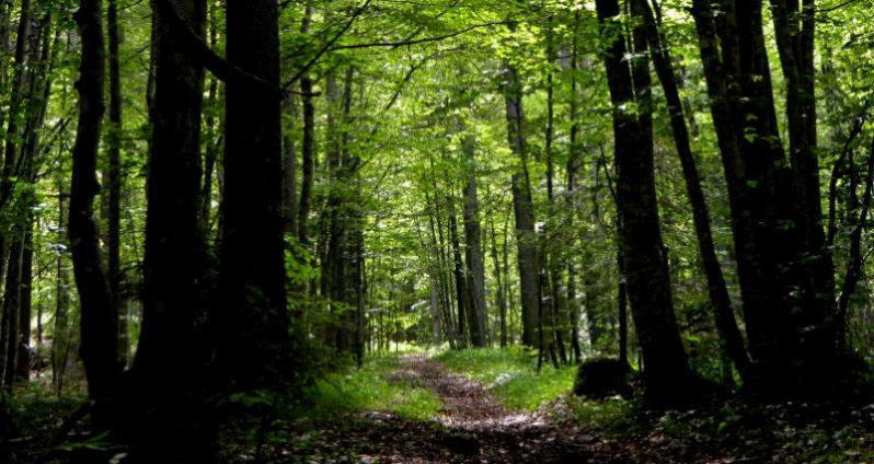 foresta-di-Somadida-798x424